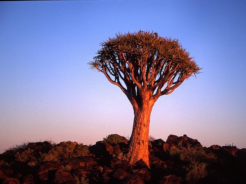 Sfeerimpressie Rondreis Namibië