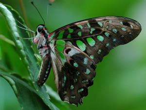Taman Negara - Vlinder