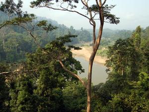 Taman Negara - Nationaal Park