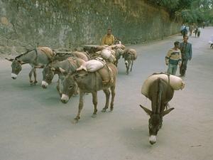 Gonder - op weg naar de markt