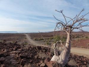 Damaraland - weg Palmwag - Opuwo