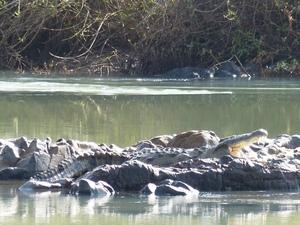 Kunenerivier - rustende krokodil