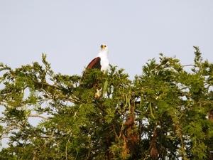 08 - Lake Mburo - visarend