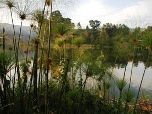 10 - Lake Bunyonyi - papyrus