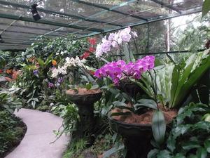 Singapore - Bloemen Botanische Tuin