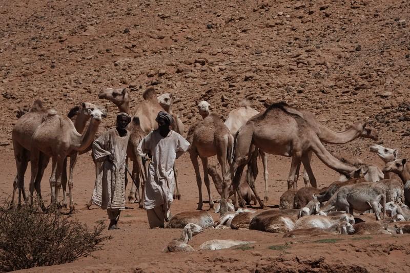 Drinkplaats voor kamelen en geiten.