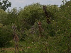 Zuid-Afrika nationale parken, 18 dgn