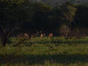 Zuid-Afrika nationale parken, 18 dgn - deel 2