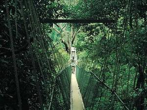 Taman Negara - Hangbrug