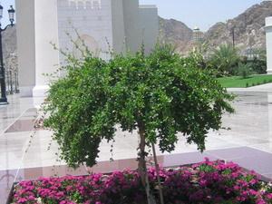 het fort van Muscat