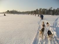Lapland hondeslee