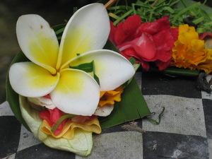 Bali Frangipani