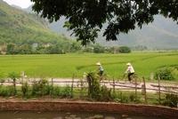 fietsen vietnam mensen rijstvelden