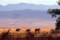 Ngorongoro krater olifanten Djoser