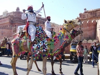 India, Camel Fair Bikaner
