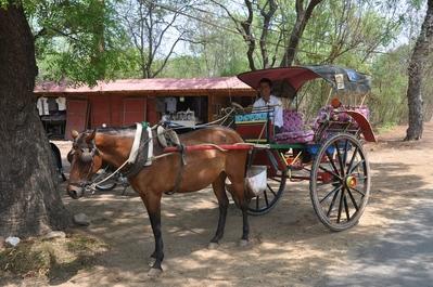 Myanamr excursie paard en wagen Djoser
