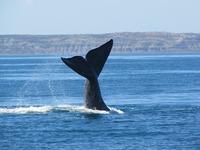 cape cod whale watching usa