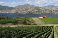 vernon wine vineyard british columbia canada Djoser