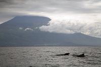 Azoren Dolfijnen Djoser