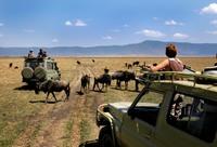 Tanzania Ngorongorokrater gamedrive Djoser