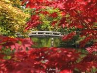 Herfstkleuren Japan Djoser