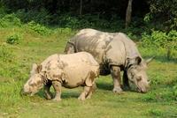 Neushoorn met jong Chitwan nationaal park Nepal Djoser