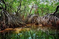 Costa Rica Mangrove Jungle Djoser