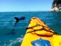 Abel Tasman kano Nieuw-Zeeland Djoser