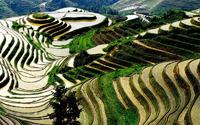 rijstterassen China