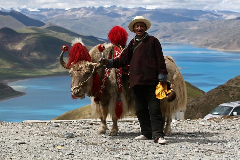 31 Man met yak Tibet
