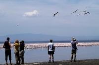 Lake Nakuru flamingo Kenia KTZA