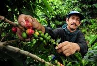 Colombia Quindio Djoser