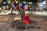 Monnik Lumbini Bodhi boom Nepal Djoser