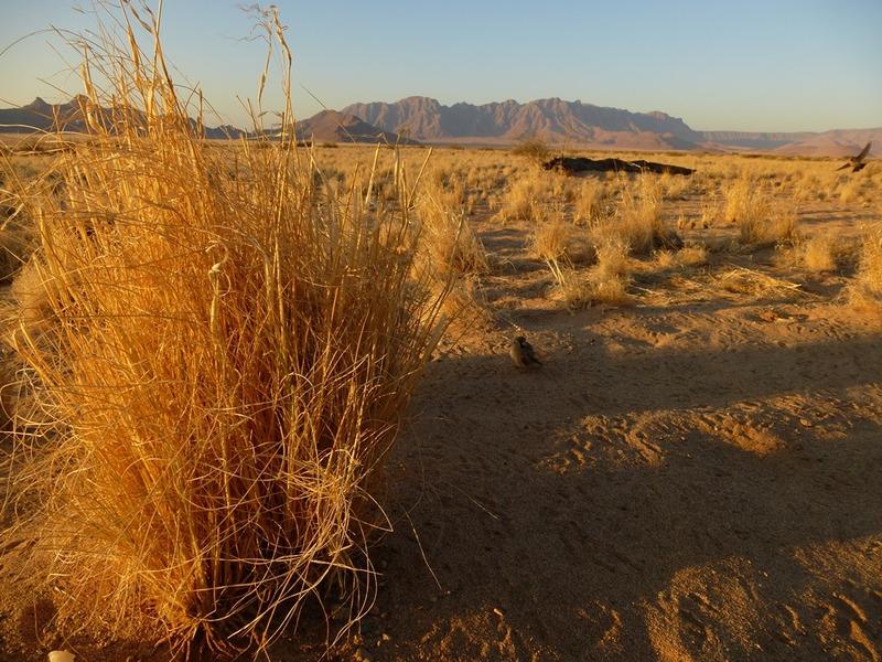 Stampriet - Kalahariwoestijn