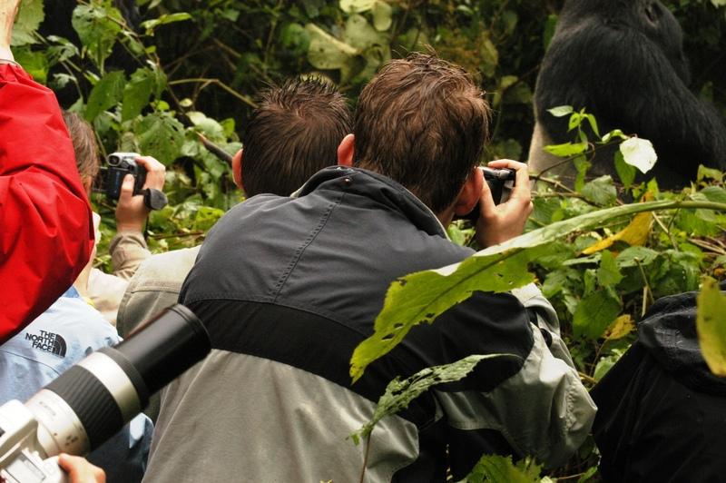 20 - Congo - berggorilla (4)