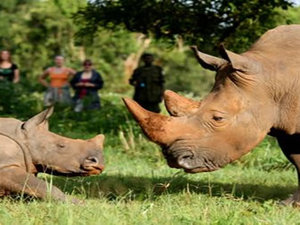 44 - Ziwa Rhino sanctuary