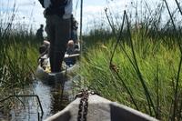 Okavangodelta Botswana Djoser