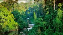 Borneo Maleisie klimaat natuur Djoser