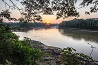 Jungle Amazone Peru Djoser