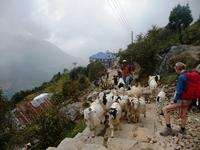 Trekking Tegenliggers Pokhara Bergen Djoser