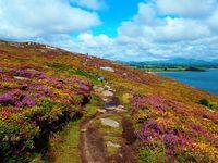 Wales Isle of Anglesey Heide Wandelreis Djoser