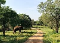 Olifant Udawalawe Sri Lanka