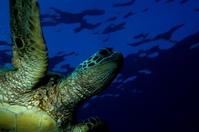 Zeeschilpad Mozambique