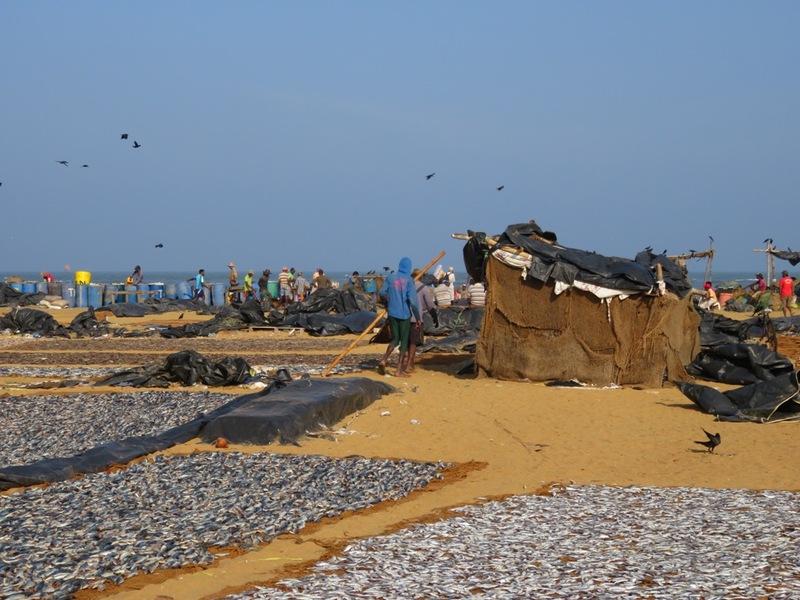 Vissers strand Negombo