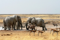 Park olifant Namibie