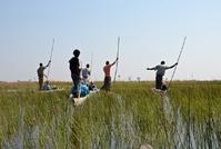 Okavangodelta Botswana