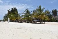 zanzibar strand palmbomen