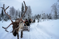Rendierslee sneeuw Finland