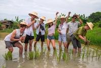 Thailand rijstveld