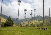 Salamina palmbomen Colombia